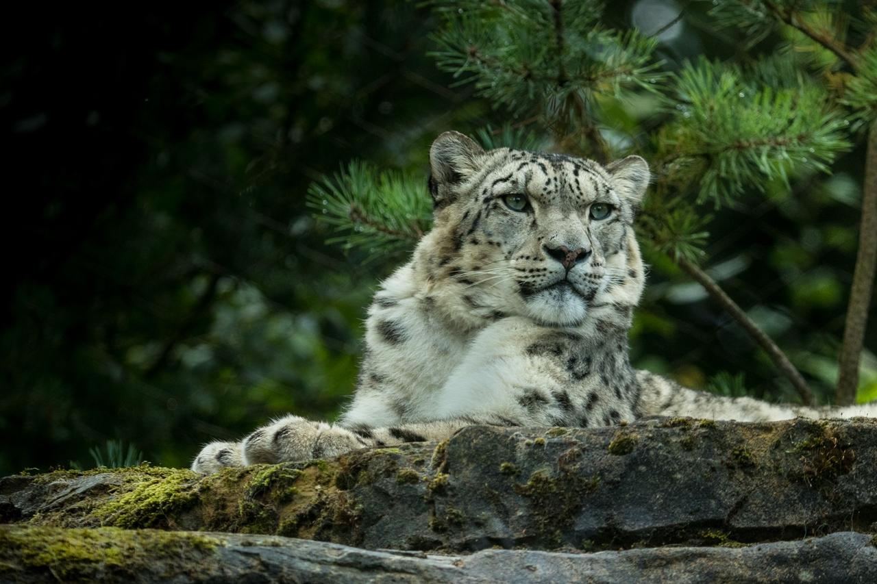 Wildlife in photographs Andrew Wakefield 32