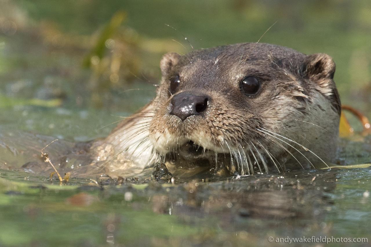 Wildlife in photographs Andrew Wakefield 34