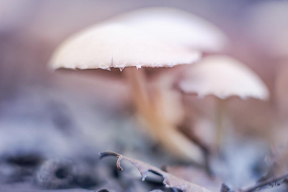 krasivye-foto-s-boke-florens-richeratu-12