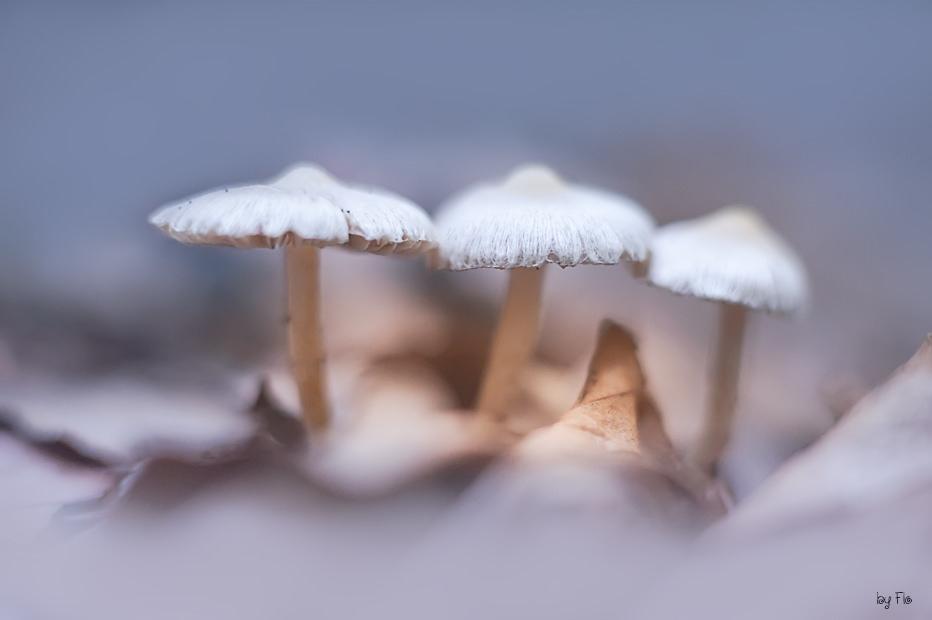 krasivye-foto-s-boke-florens-richeratu-8