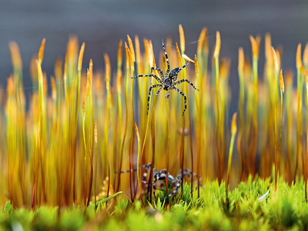 A selection of the best photos of National Geographic in April 2016 -Part 2- 10