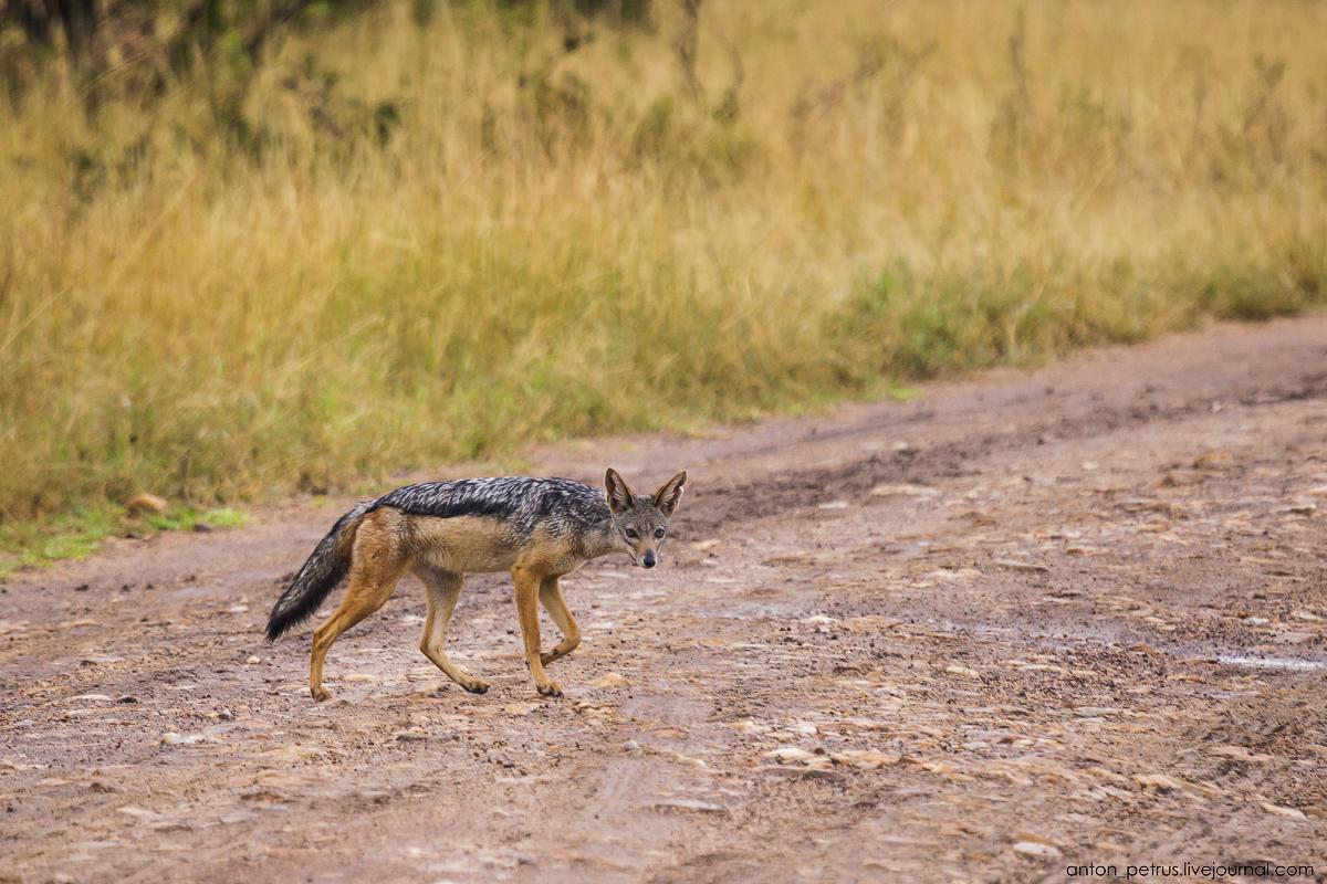 Africa Alive. Park Masai Mara 02