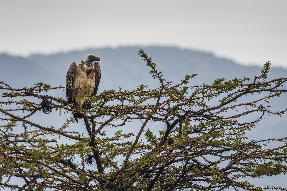Africa Alive. Park Masai Mara 03