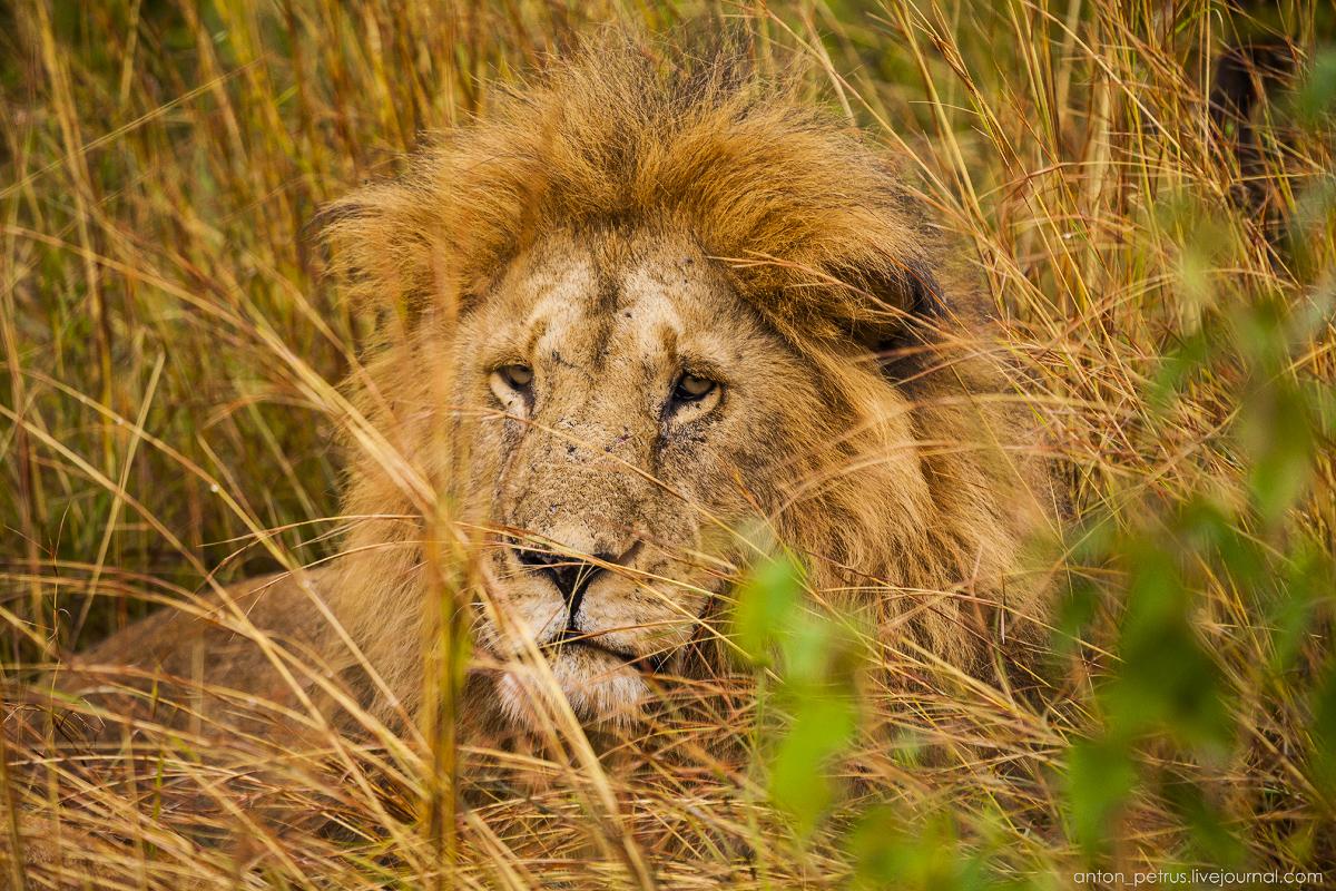Africa Alive. Park Masai Mara 04