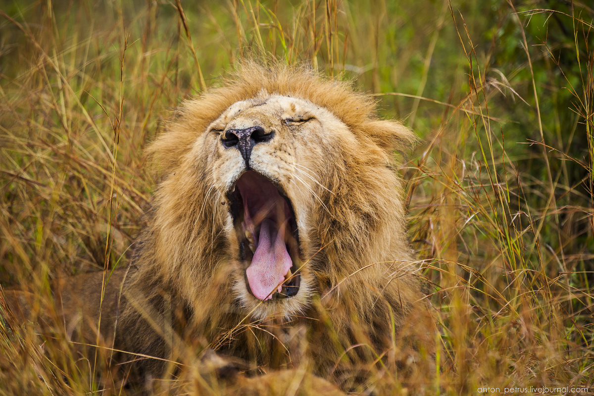 Africa Alive. Park Masai Mara 05