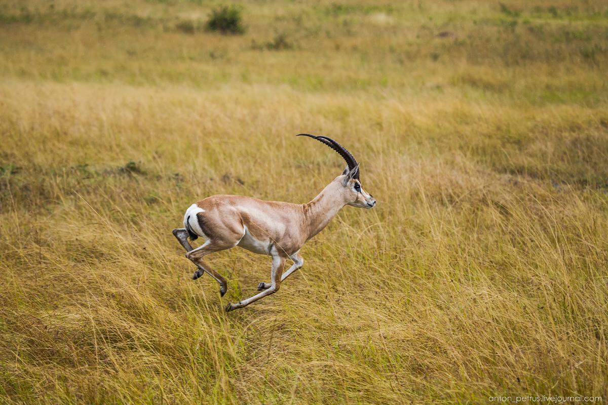 Africa Alive. Park Masai Mara 07