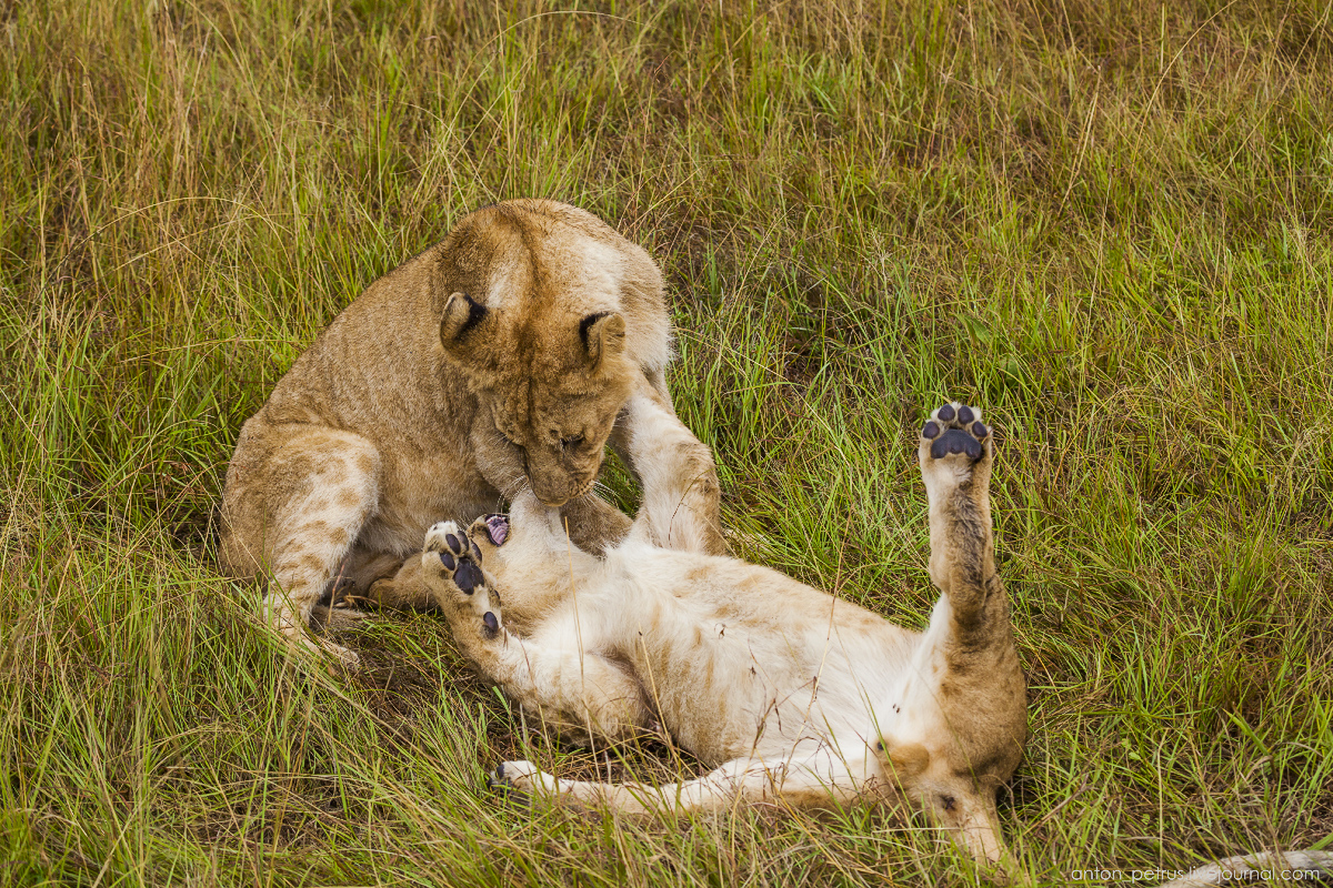 Africa Alive. Park Masai Mara 08