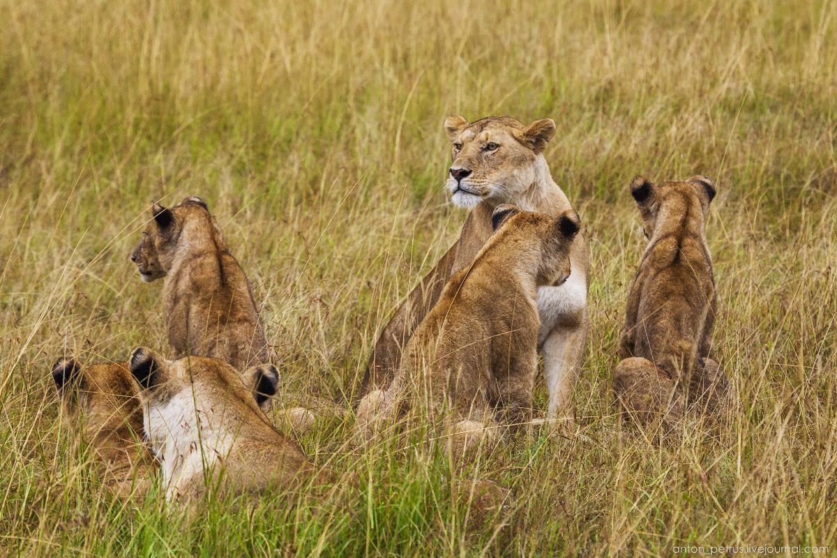 Africa Alive. Park Masai Mara 09