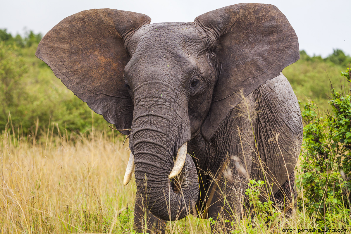 Africa Alive. Park Masai Mara 12