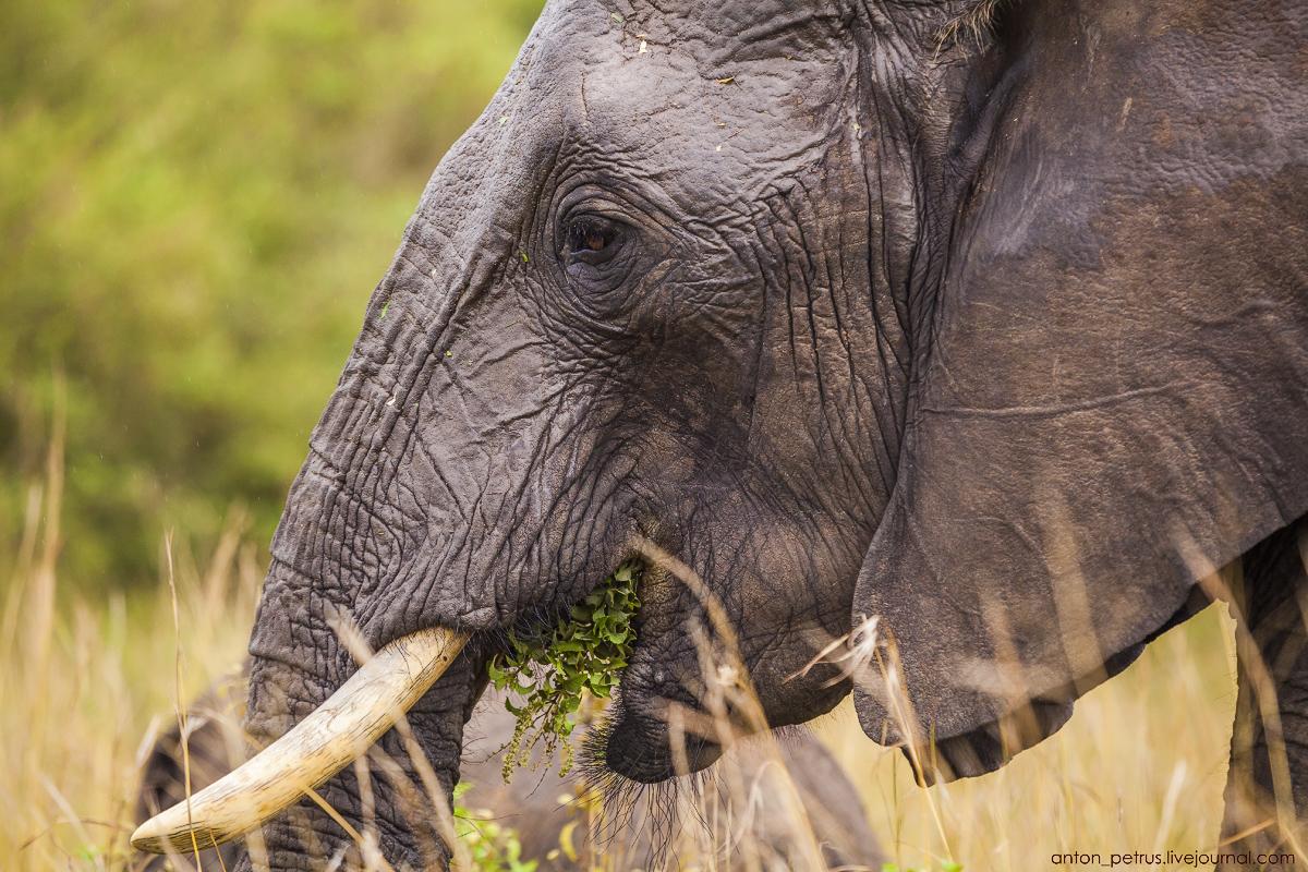 Africa Alive. Park Masai Mara 13