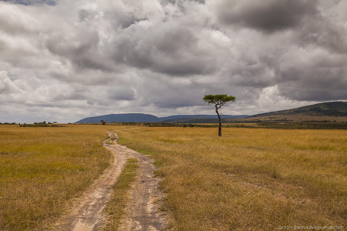 Africa Alive. Park Masai Mara 14