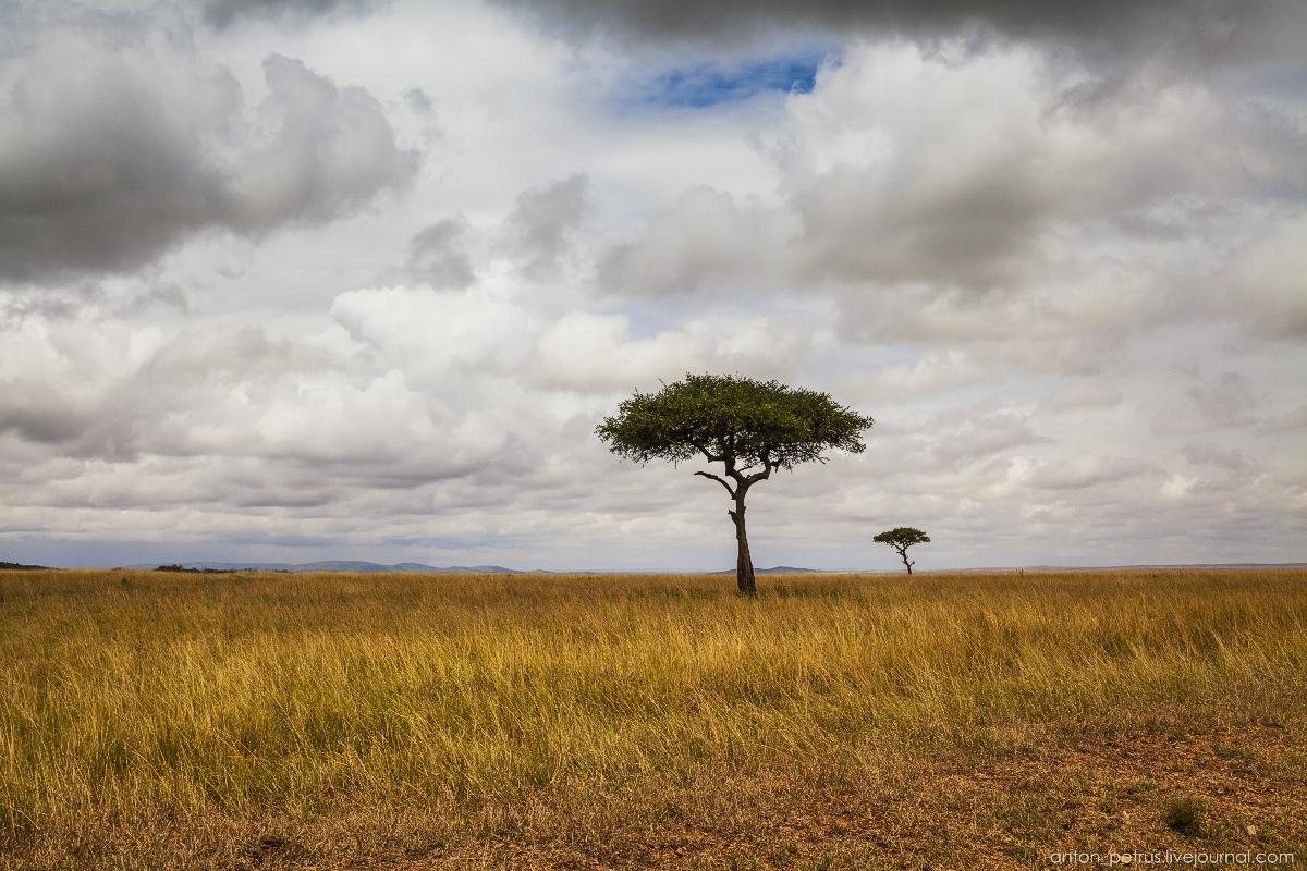 Africa Alive. Park Masai Mara 15