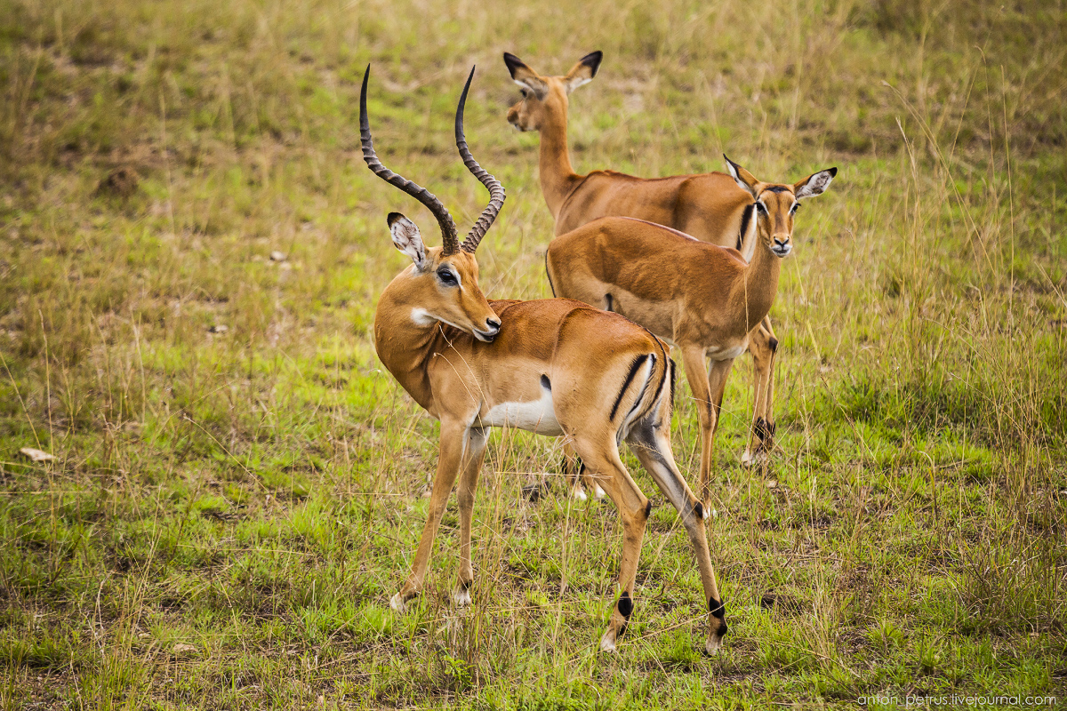 Africa Alive. Park Masai Mara 17