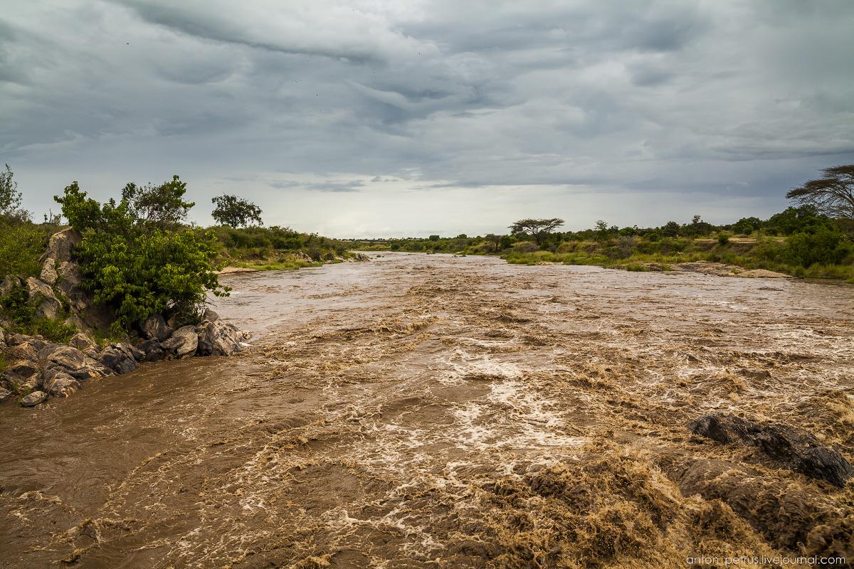 Africa Alive. Park Masai Mara 20