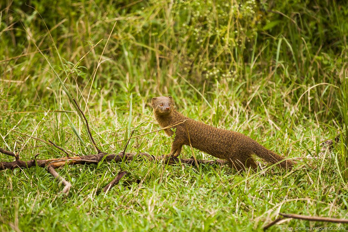 Africa Alive. Park Masai Mara 21