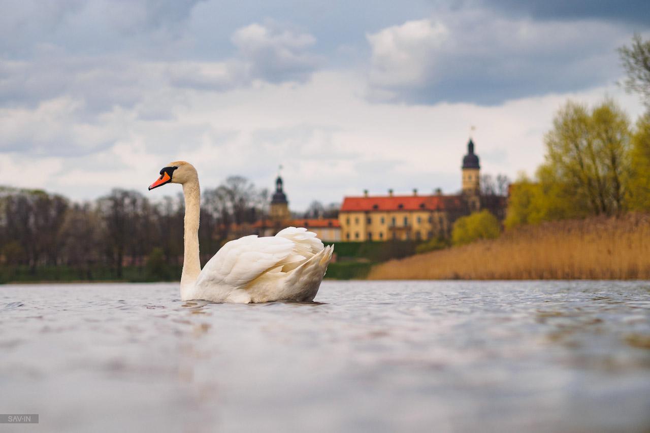 Белорусская весна