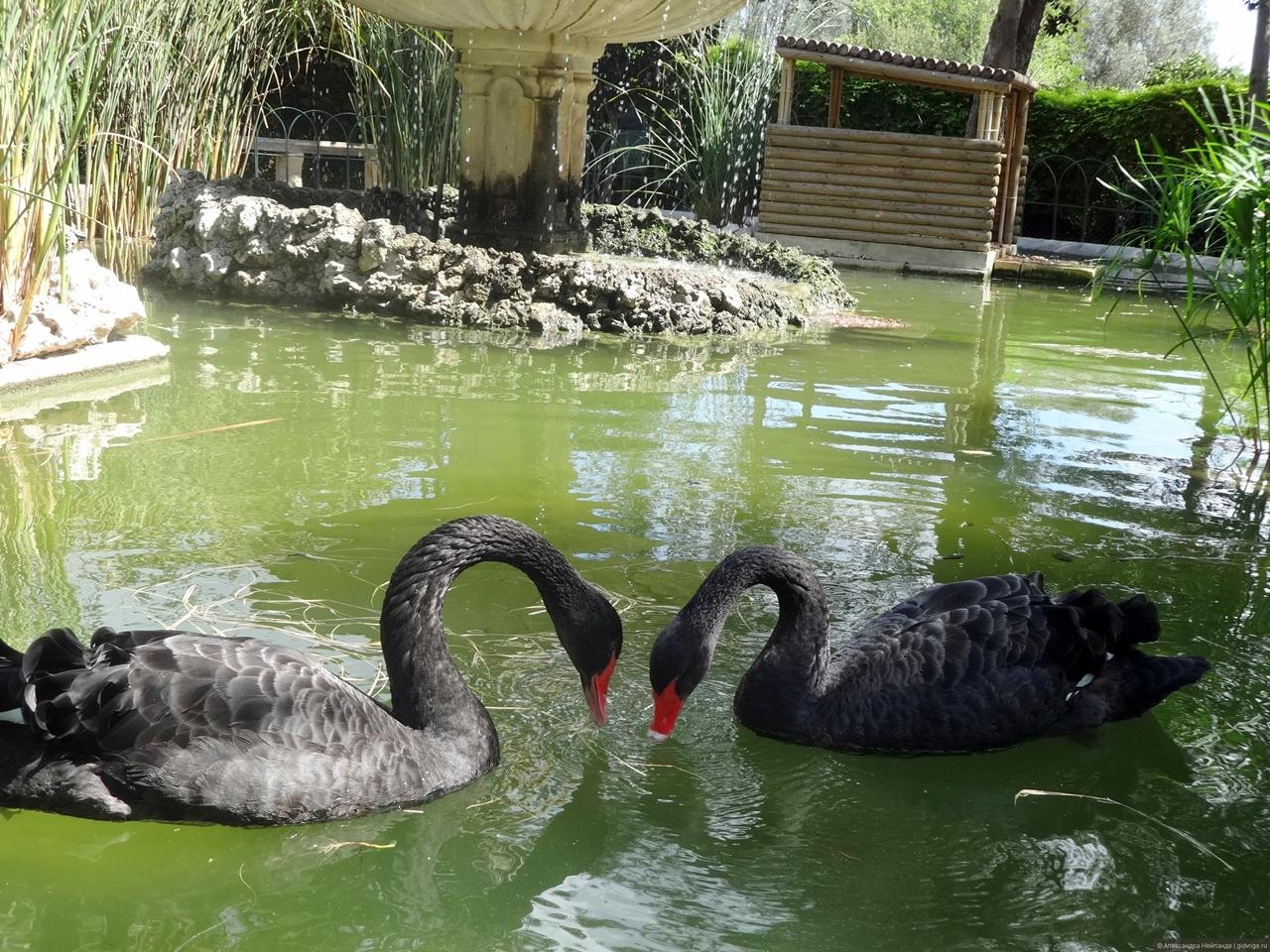 Black swans 21