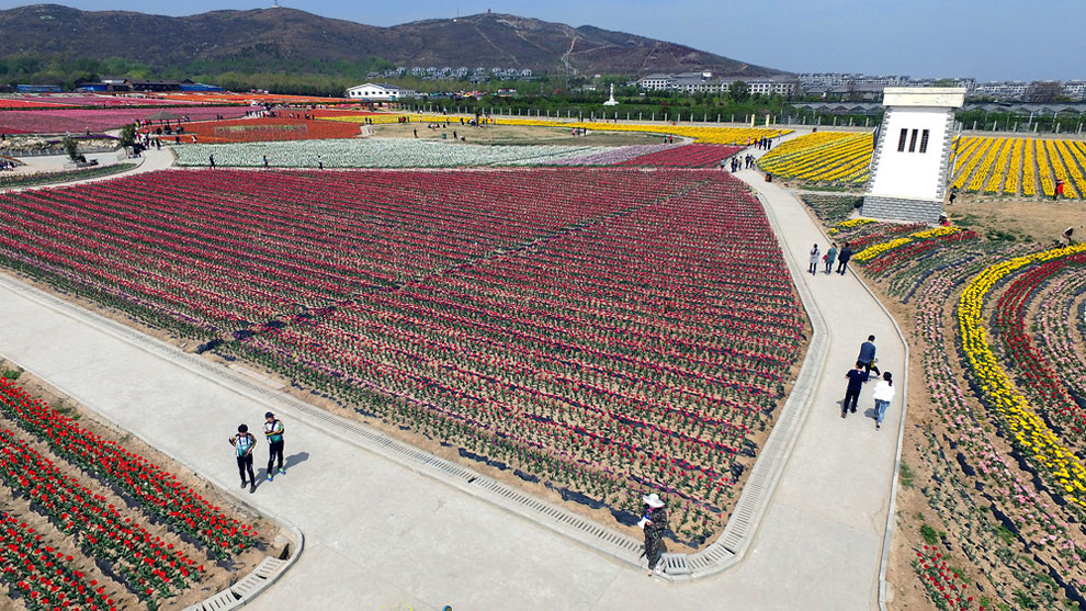 Breathtaking Aerial Views Of China's Tulip Fields 05