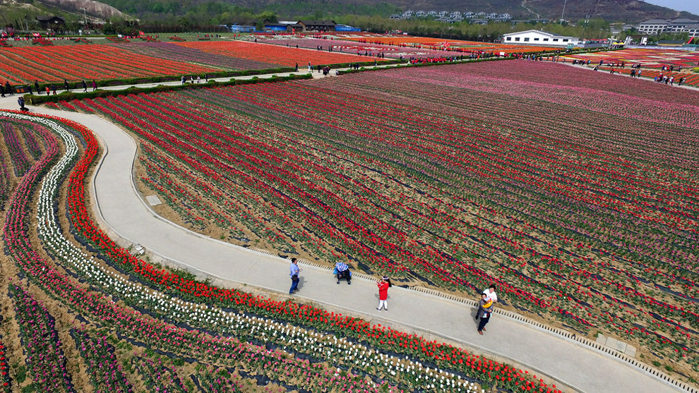 Breathtaking Aerial Views Of China's Tulip Fields 06