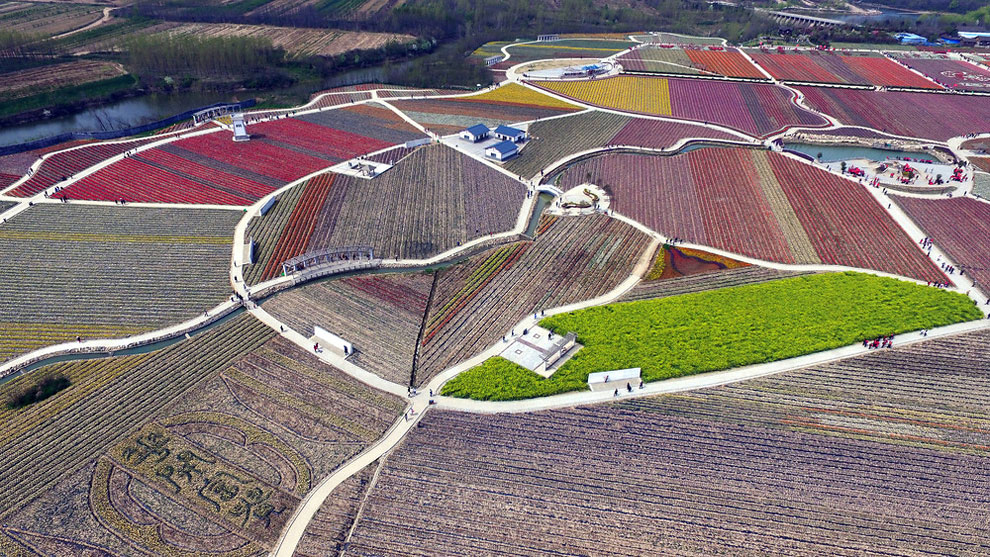 Breathtaking Aerial Views Of China's Tulip Fields 07