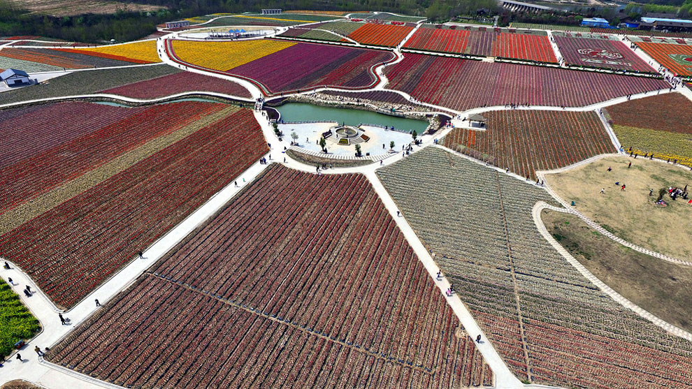 Breathtaking Aerial Views Of China's Tulip Fields 08
