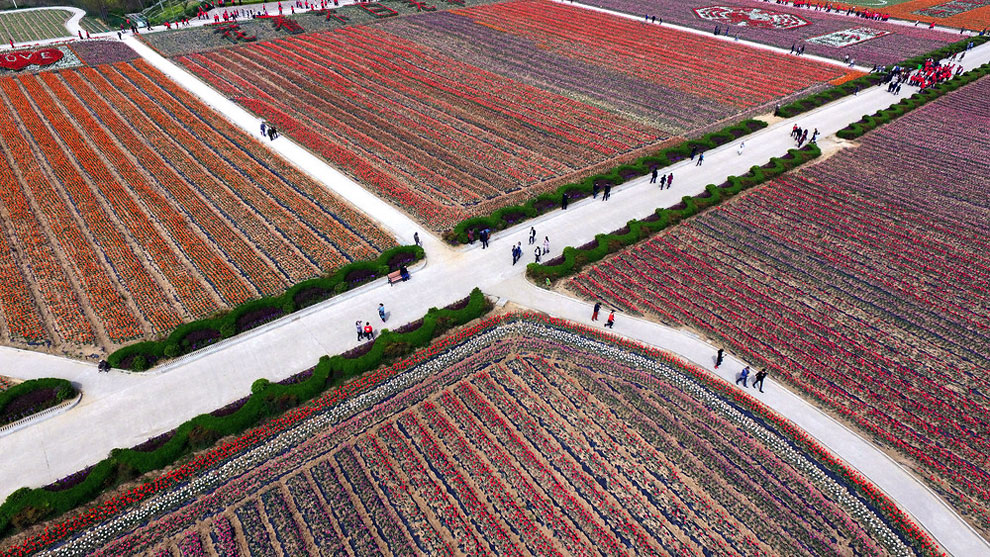Breathtaking Aerial Views Of China's Tulip Fields 09