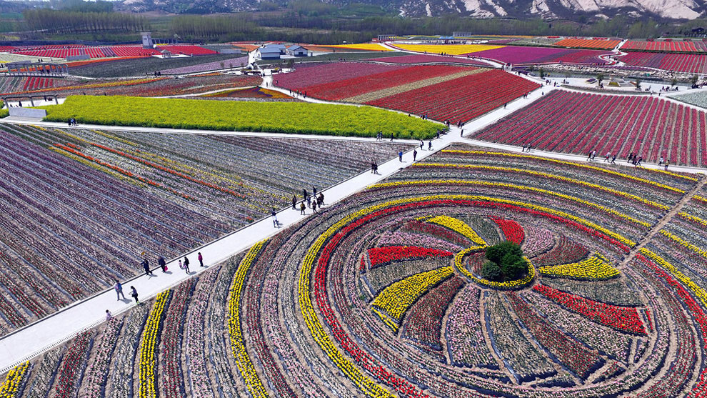 Breathtaking Aerial Views Of China's Tulip Fields 11