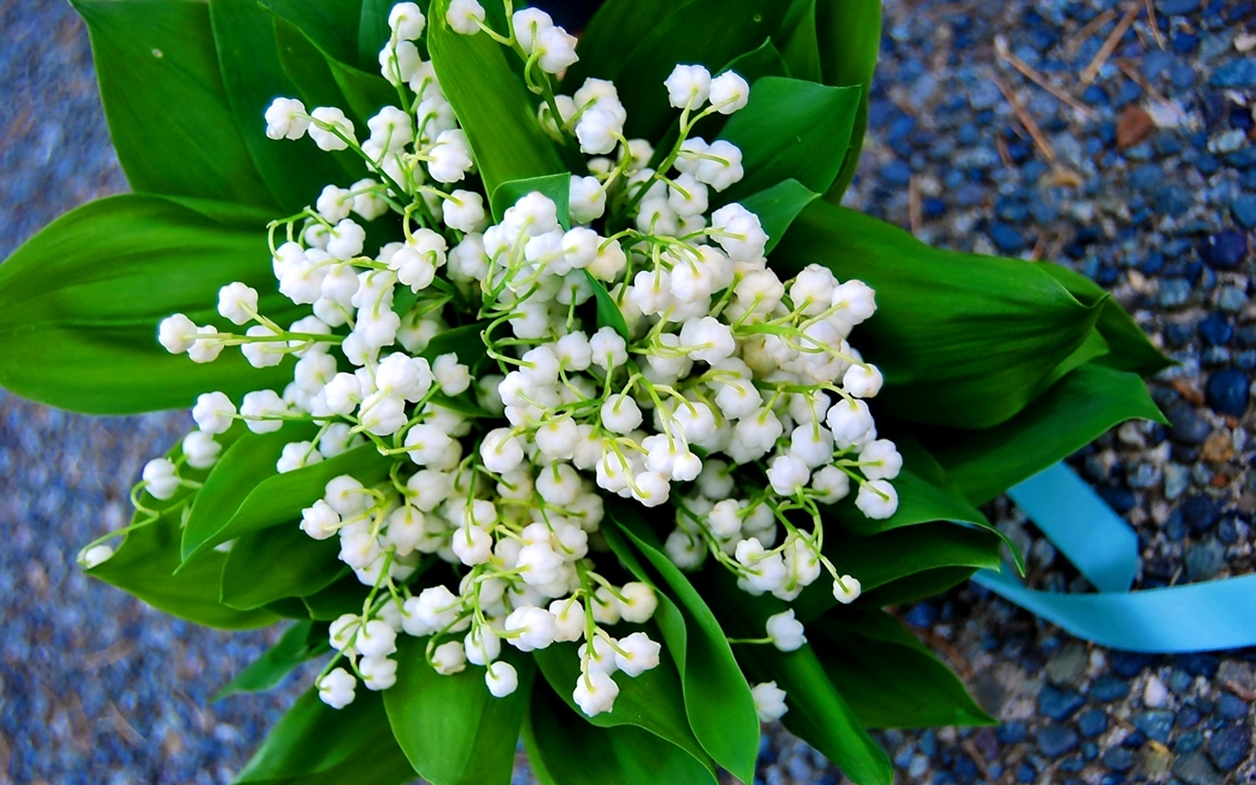 Charming Lily of the valley 11