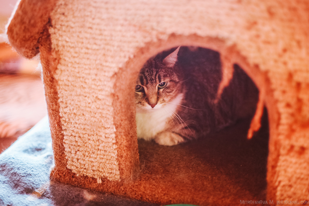 Home for homeless animals 11
