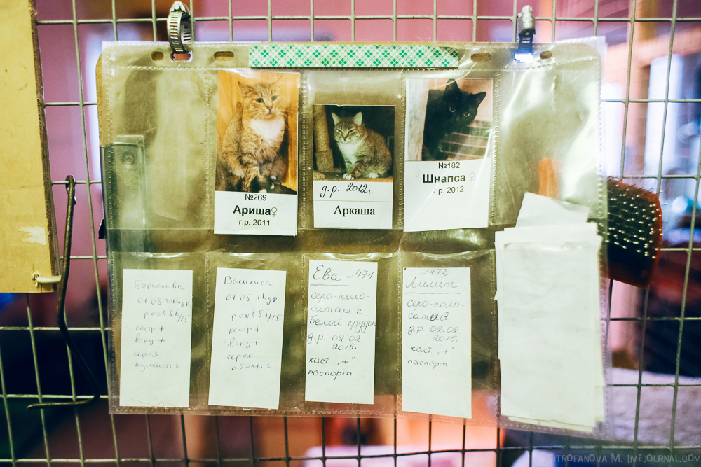 Home for homeless animals 13