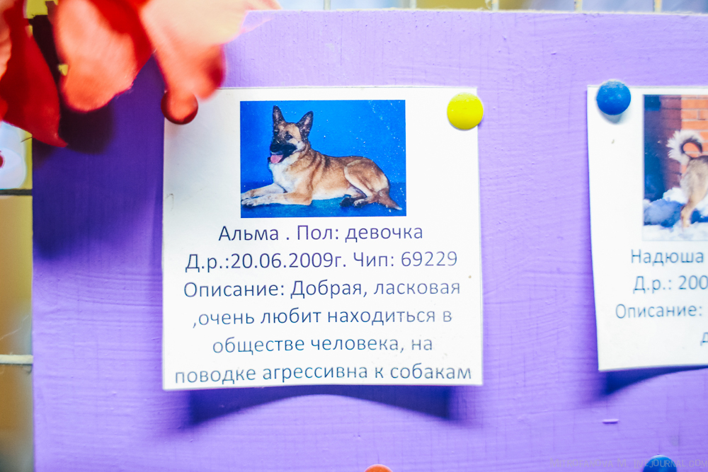 Home for homeless animals 21
