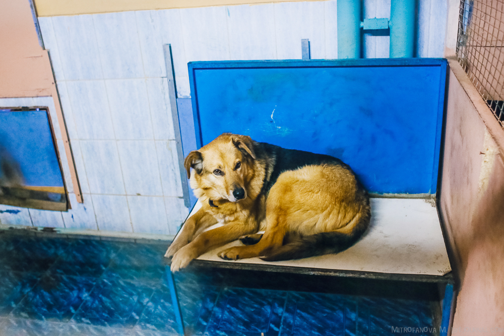 Home for homeless animals 23