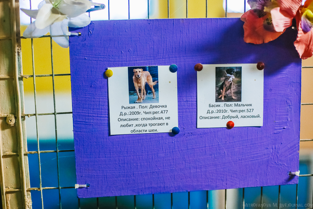 Home for homeless animals 24