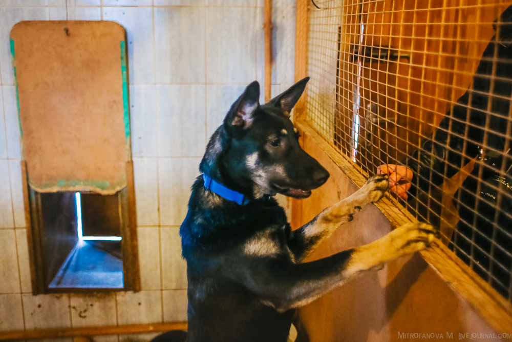 Home for homeless animals 26