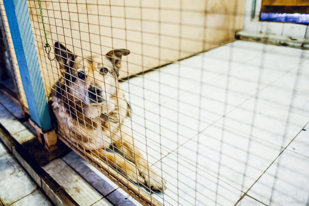 Home for homeless animals 37