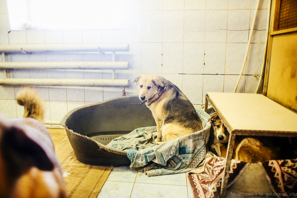 Home for homeless animals 39