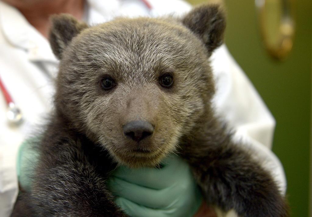 В Польше спасли маленькую медведицу