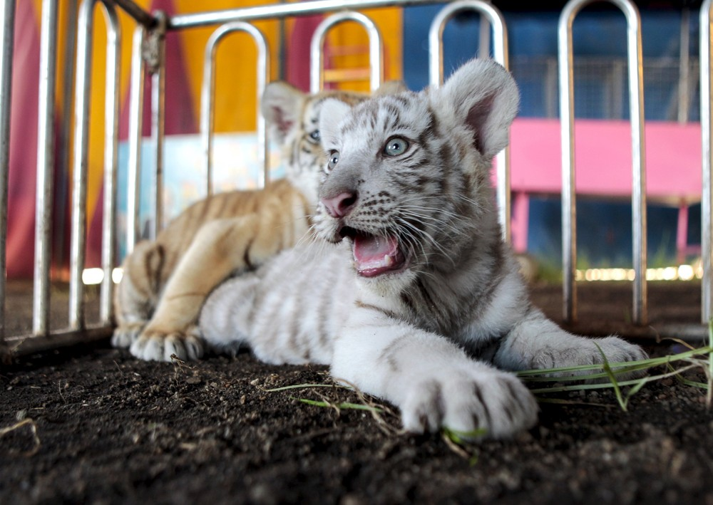 Interesting photos with animals 04