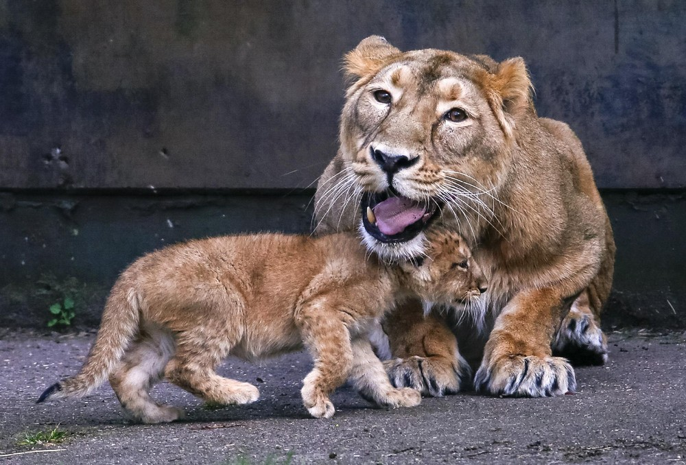 Interesting photos with animals 09