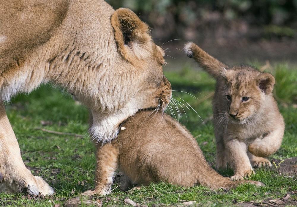 Interesting photos with animals 10