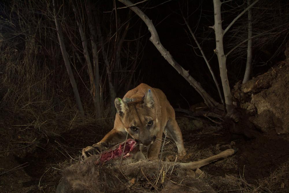 Interesting photos with animals 12