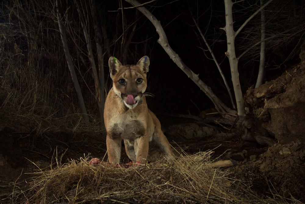 Interesting photos with animals 13