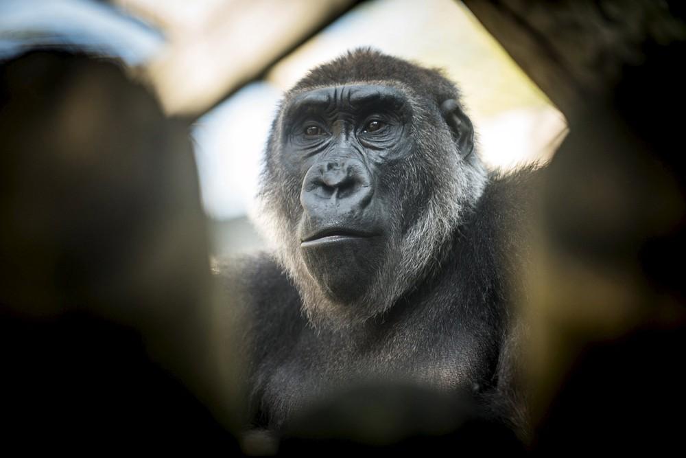 Interesting photos with animals 17