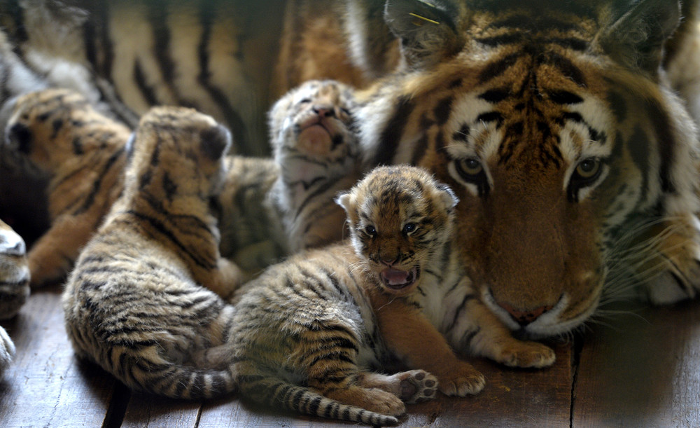 Interesting photos with animals 18