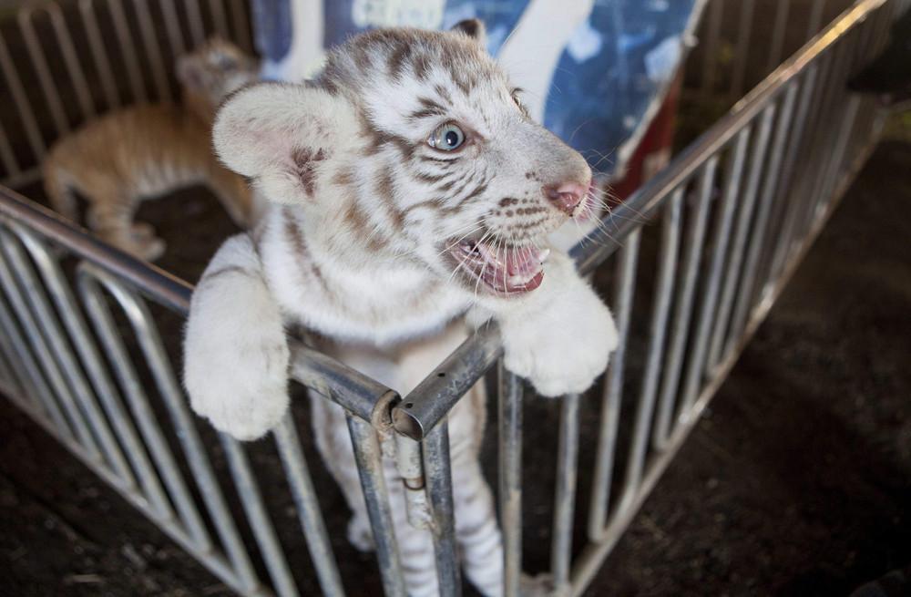 Interesting photos with animals 19