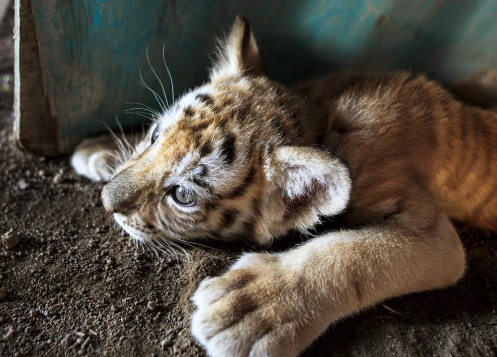Interesting photos with animals 20