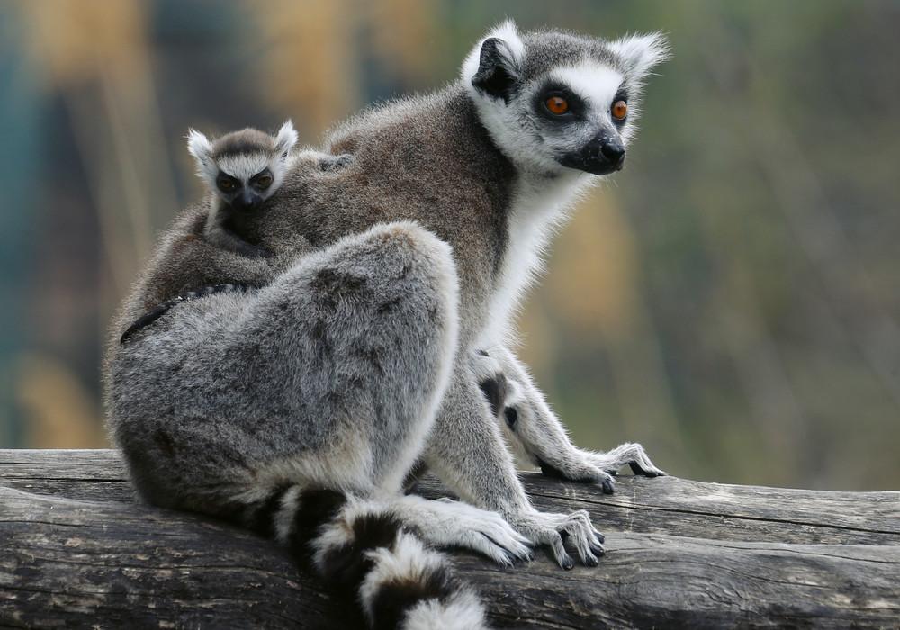 Interesting photos with animals 22
