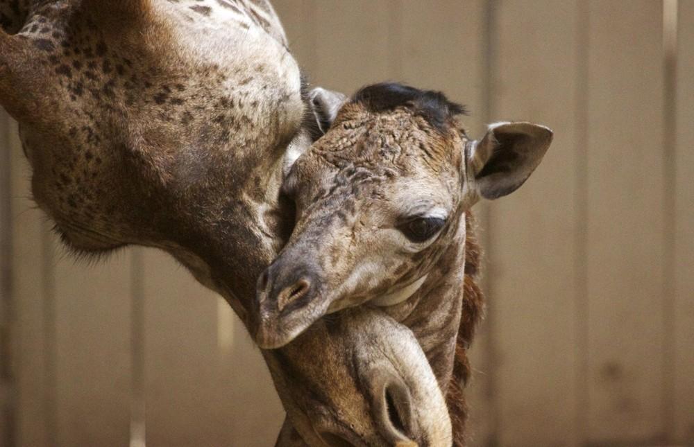 Interesting photos with animals 24