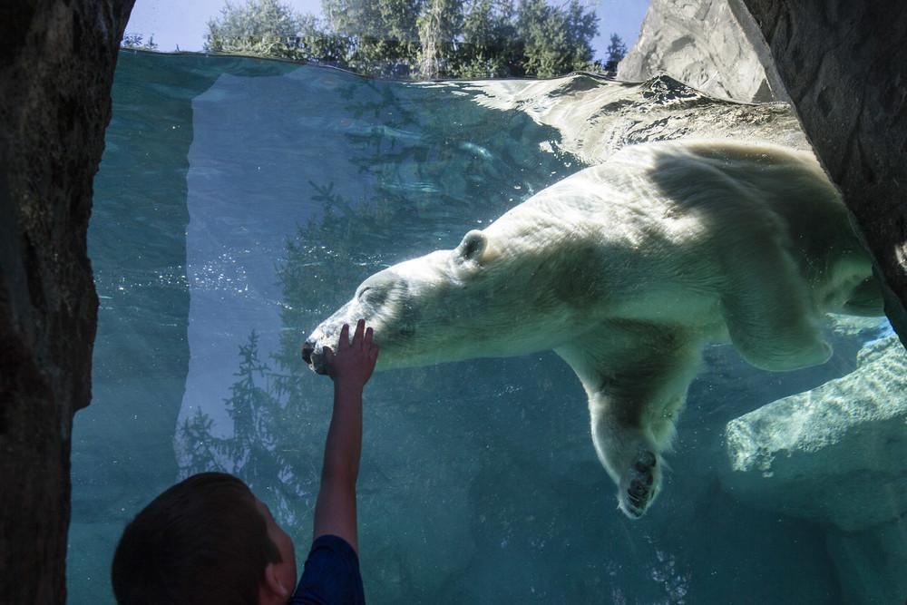 Interesting photos with animals 27