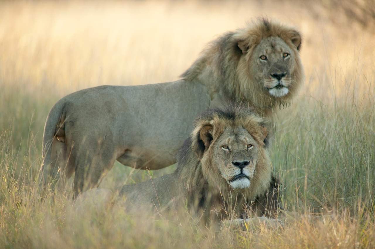National Park -Hwange- the lion and Cecil 11